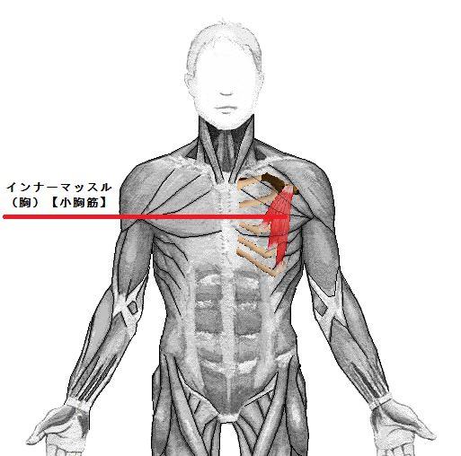 inner-muscle